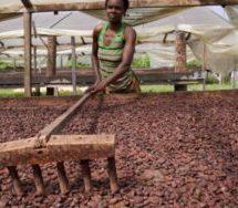 Minority: Selling cocoa fertiliser 'daylight robbery'