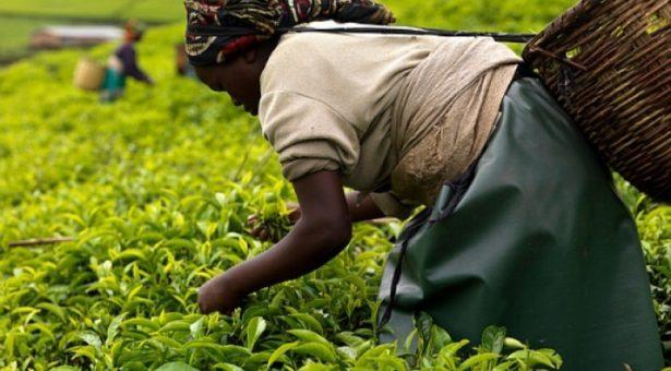 'Food and Jobs prog. has great job potential'