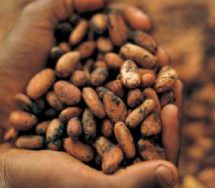 Int'l cocoa giants 'poised' to pursue local processing in Ghana