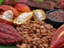 Galamsey killing cocoa industry – Cocobod CEO